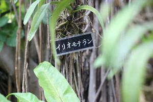 okinawa987-449