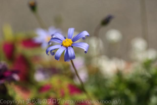 okinawa-_1022140316