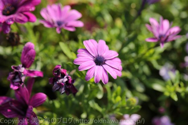 okinawa-_1023140316