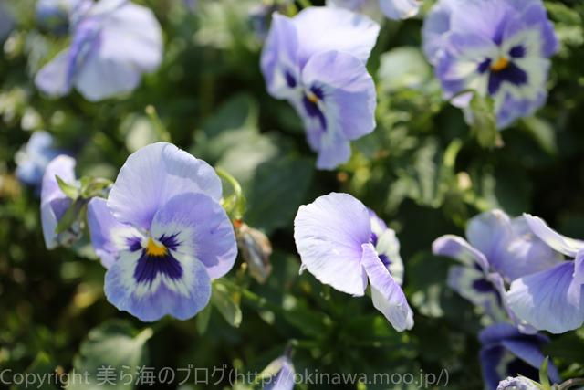 okinawa-_1024140316