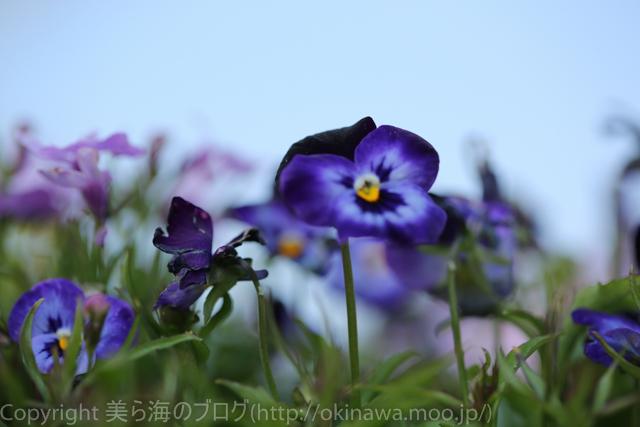 okinawa-_1074140316