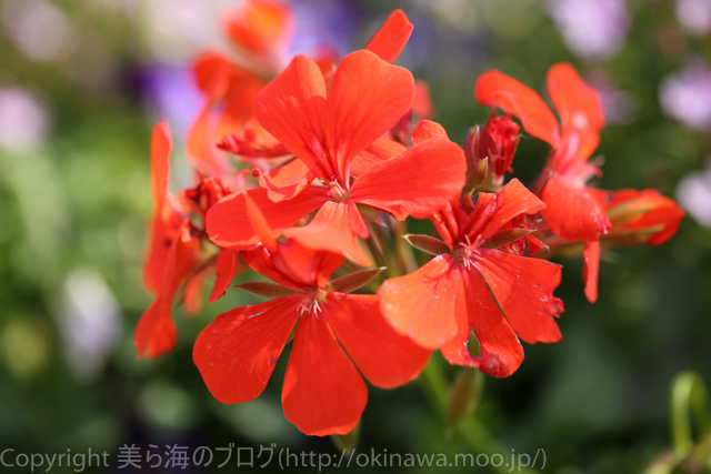 okinawa-_1078140316