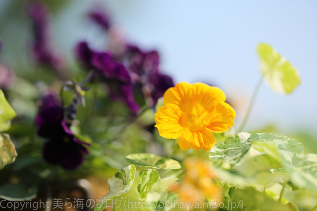 okinawa-_1079140316