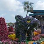 沖縄こどもの国花まつり