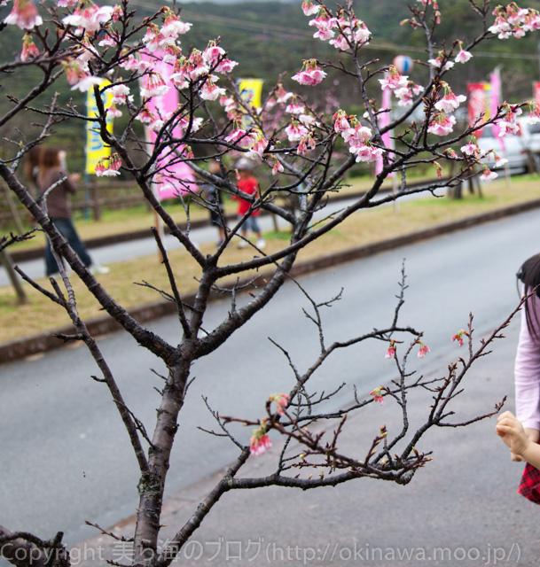 okinawa-_4120129
