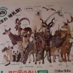 「大哺乳類展 ~ぼくらのなかまたち~」(沖縄県立博物館)へ行ってきました!