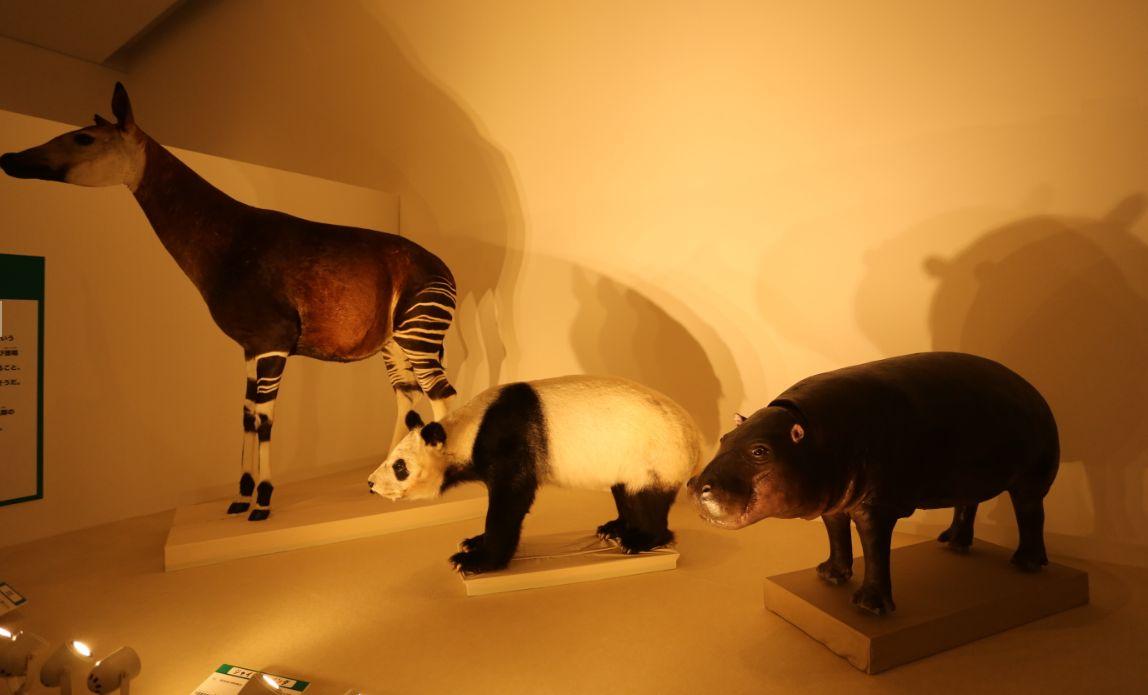 パンダとコビトカバ