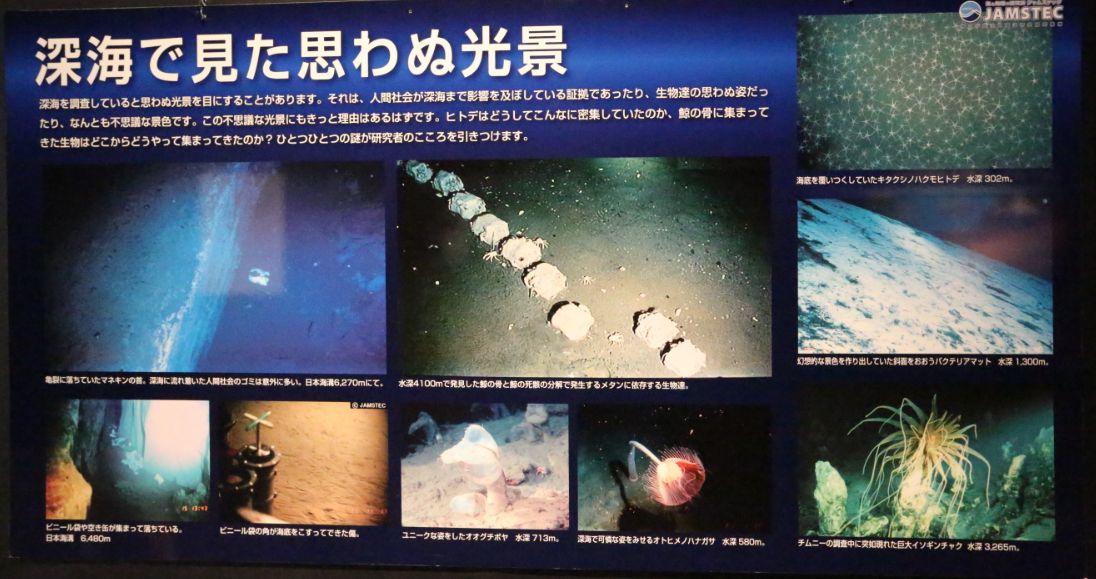 海底で見た思わぬ光景
