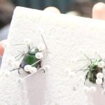 子供の国で「昆虫標本」体験